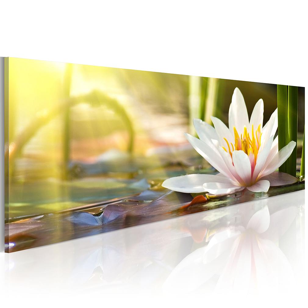 leinwand bild blumen wei gold orchidee lilie rosa wandbilder xxl gro e auswahl ebay. Black Bedroom Furniture Sets. Home Design Ideas