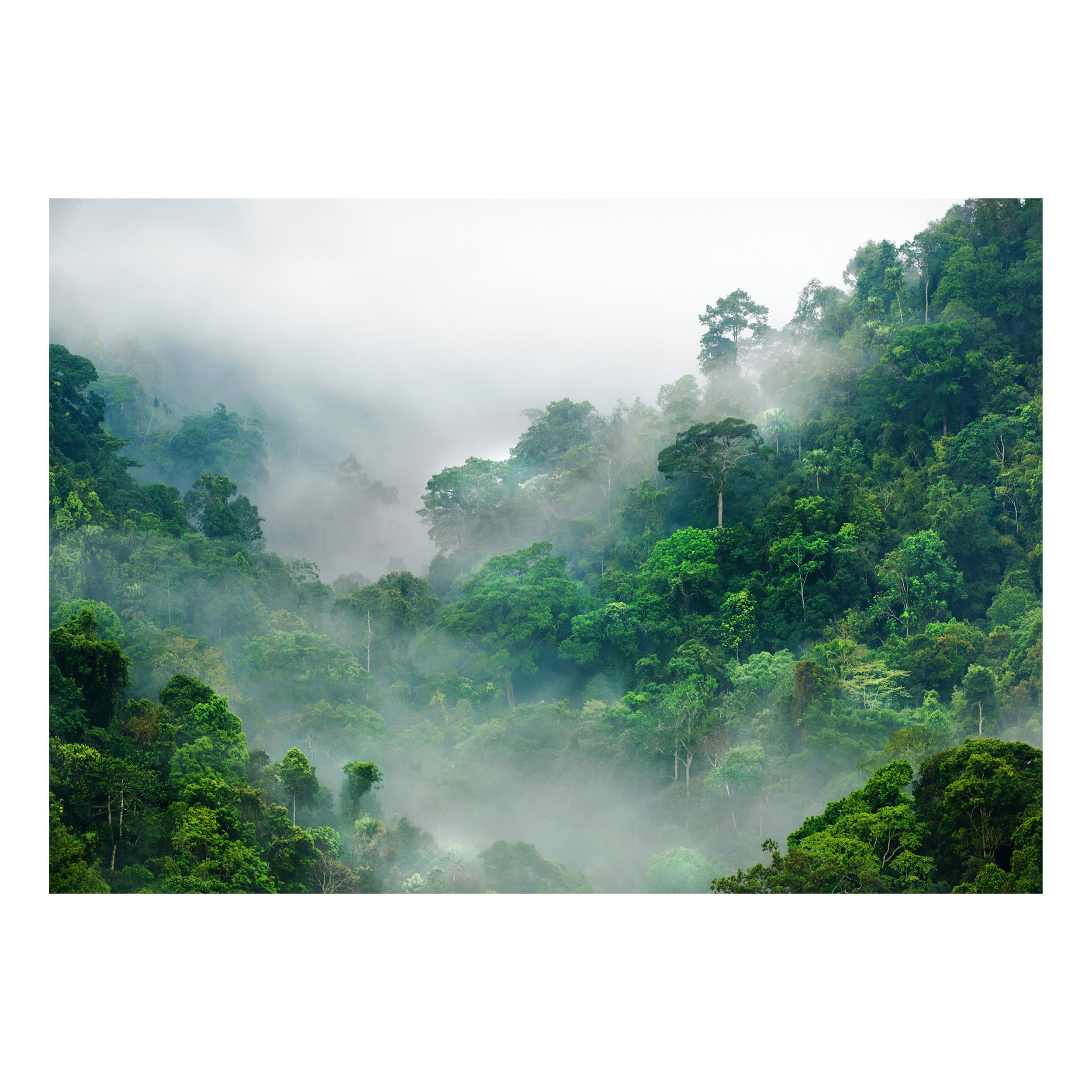 vlies fototapete natur wald landschaft nebel tapete. Black Bedroom Furniture Sets. Home Design Ideas